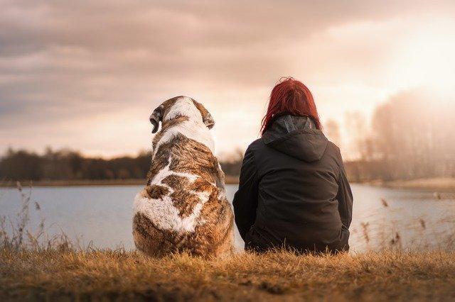 hond, trouwe vriend