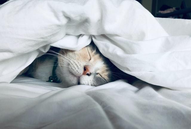 Hoe werkt een huisdierenverzekering voor katten?